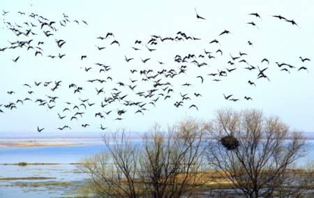 东西湖区大雁湖景色