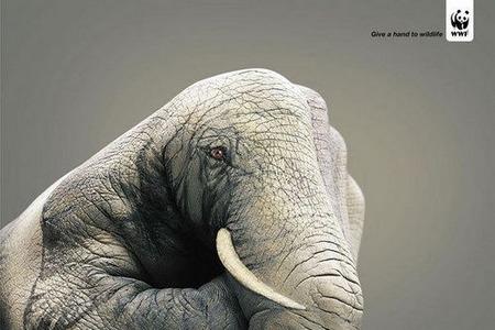 wwf动物保护公益广告