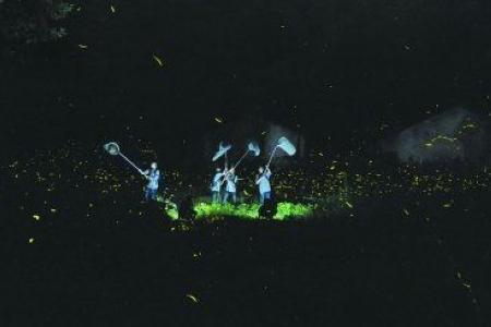 曝光后,拍下了萤火虫发光的绚丽场景-武汉现最大萤火虫种群 超10