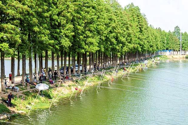"""在生态园,湖心岛,湖光阁等景观节点,阮成发强调,郊野道是东湖绿道的"""""""
